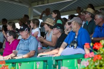 Reportáž | Sportovní | Dostihový den v Pardubicích