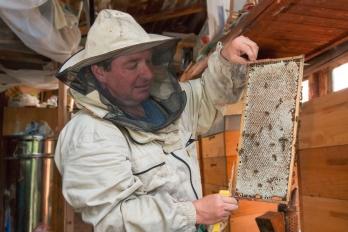 Včelařství - Stáčení medu