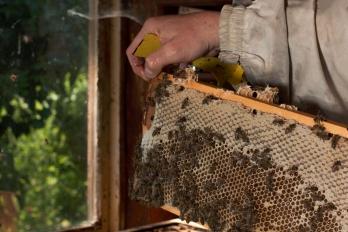Reportáž | Hobby | Včelařství