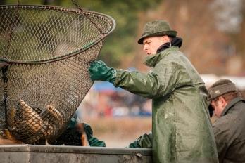 Rybářství - Výlov rybníku
